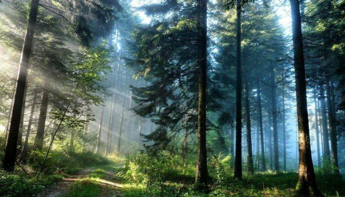krajobraz-beskidzkiego-lasu